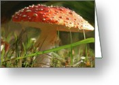 Gnome Greeting Cards - Shroom Time Greeting Card by Patti Siehien