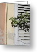 Stucco Walls Greeting Cards - Shuttered Windows On The Side Greeting Card by Gina Martin