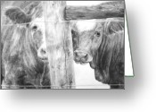 Livestock Drawings Greeting Cards - Shy guys Greeting Card by Meagan  Visser