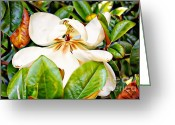 Magnolia Mixed Media Greeting Cards - Shy Magnolia Greeting Card by Teresa Davis