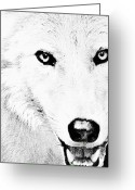Wolves Drawings Greeting Cards - Shy Wolf Greeting Card by Debra     Vatalaro