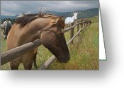 Buckskin Horse Greeting Cards - Shyness Greeting Card by Julie Magers Soulen