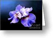 Bud Digital Art Greeting Cards - Siberian Iris Greeting Card by Robert Foster
