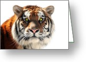 Siberian Tiger Greeting Cards - Siberian Tiger on White Greeting Card by Julie L Hoddinott
