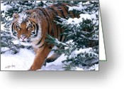 Big Cat Greeting Cards - Siberian Tiger Greeting Card by Thomas and Pat Leeson and Photo Researchers