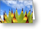 Thorn Greeting Cards - Side View Of Cactus On Blue Sky Greeting Card by Greg Adams Photography