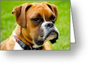Dog Prints Photo Greeting Cards - Sidney The Boxer Greeting Card by Chris Thaxter