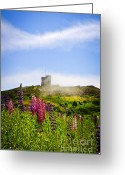 Lupines Greeting Cards - Signal Hill in St. Johns Newfoundland Greeting Card by Elena Elisseeva