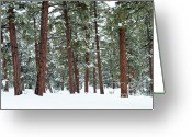 Ponderosa Greeting Cards - Silence of the Woods Greeting Card by Sandra Bronstein