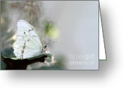 Gossamer Greeting Cards - Silent Beauty Greeting Card by Sabrina L Ryan
