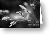 Wayside Greeting Cards - Silently - black and white Greeting Card by Hideaki Sakurai