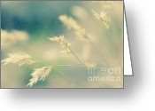 Wayside Greeting Cards - Silently - light Greeting Card by Hideaki Sakurai