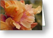 Tropical Gardens Greeting Cards - Silenzio Del Momento Greeting Card by Sharon Mau