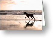 Hound Greeting Cards - Silhouette of dog on beach at sunset Greeting Card by Susan  Schmitz
