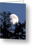 Glowing Moon Greeting Cards - Silhouetted By The Moon Greeting Card by Will Borden