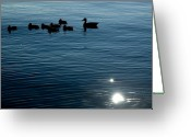 Silhouettes Greeting Cards - Silhouetted Duck Family Swims Greeting Card by Todd Gipstein