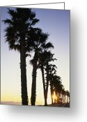 Image Type Photo Greeting Cards - Silhouetted Palm Trees Along Surfers Greeting Card by Rich Reid