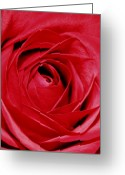 Floral Greeting Cards - Silky Petals Greeting Card by Cathie Tyler
