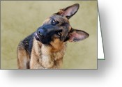 Alsatian Greeting Cards - Silly Boy Greeting Card by Sandy Keeton