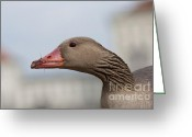 Nymphenburg Greeting Cards - Silly Goose Greeting Card by Andrew  Michael