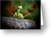 Outdoor Still Life Greeting Cards - Silly Mantis Greeting Card by Karen M Scovill