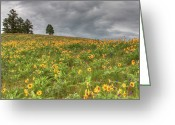 Balsamroot Greeting Cards - Silver and Gold Greeting Card by Katie LaSalle-Lowery
