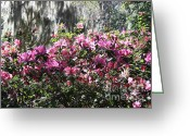 Savannah Square Greeting Cards - Silver and Pink in Savannah Greeting Card by Carol Groenen