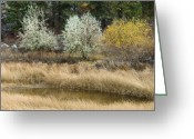 Minard Greeting Cards - Silver Birch 4 Greeting Card by Vern Minard