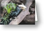 Hornbill Greeting Cards - Silver Cheeked Hornbill Greeting Card by Ralph Brannan