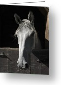 Horse Greeting Cards - Silver Greeting Card by Jack Goldberg