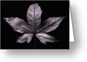 Autumn Photographs Greeting Cards - Silver Leaf Greeting Card by Artecco Fine Art Photography - Photograph by Nadja Drieling