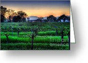 Mountain Vineyards Greeting Cards - Silver Oak Twilight Greeting Card by Mars Lasar