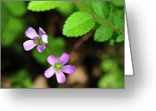 Tiny Flowers Greeting Cards - Simple Beauty II Greeting Card by Stephen Anderson