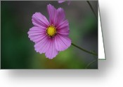 Natures Photos Greeting Cards - Simple Cosmos Moments Greeting Card by Neal  Eslinger