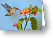 Feeding Greeting Cards - Simple Delights Greeting Card by Fraida Gutovich