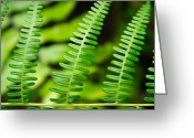 Forest Floor Photo Greeting Cards - Simple Green Greeting Card by Adam Romanowicz