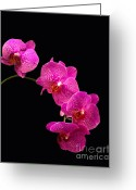 Framed Art Pyrography Greeting Cards - Simply Beautiful Purple Orchids Greeting Card by Michael Waters