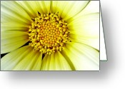 Macro Pyrography Greeting Cards - Simply Daisy Greeting Card by JoAnn SkyWatcher
