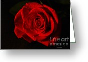 Rose Photos Greeting Cards - Simply Red  Greeting Card by Christopher  Ward