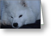 Dog Prints Photo Greeting Cards - Sincerity Greeting Card by Lisa  DiFruscio