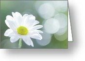 Stamen Greeting Cards - Single Chrysanthemum Greeting Card by Peter Chadwick LRPS