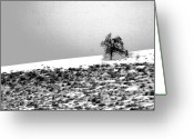 Winter Trees Greeting Cards - Single Greeting Card by Julie Lueders 