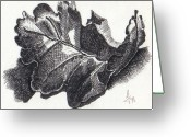 Oak Leaf Drawings Greeting Cards - Single oak leaf Greeting Card by Lucy Foglietta