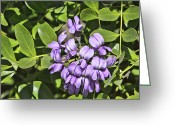 Mountain Laurel Greeting Cards - Single Purple Mountain Laurel Blossom Greeting Card by Linda Phelps