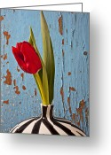 Stripes Greeting Cards - Single Red Tulip Greeting Card by Garry Gay