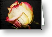 Cream Roses Greeting Cards - Single Rose two Greeting Card by Cathie Tyler
