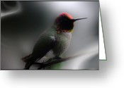 Oregon Wildlife Digital Art Greeting Cards - Sir Dancelot Greeting Card by Holly Ethan