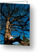 Pondering Greeting Cards - Sitting In Tree 2 Greeting Card by Scott Sawyer