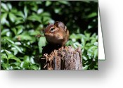 Fur Stripes Greeting Cards - Sitting on a Post Greeting Card by Karol  Livote