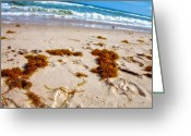 Beach Photograph Photo Greeting Cards - Sitting on the beach Greeting Card by Toni Hopper